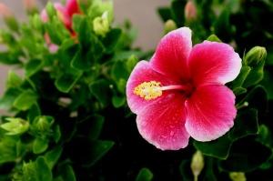 hawaii-644088_640