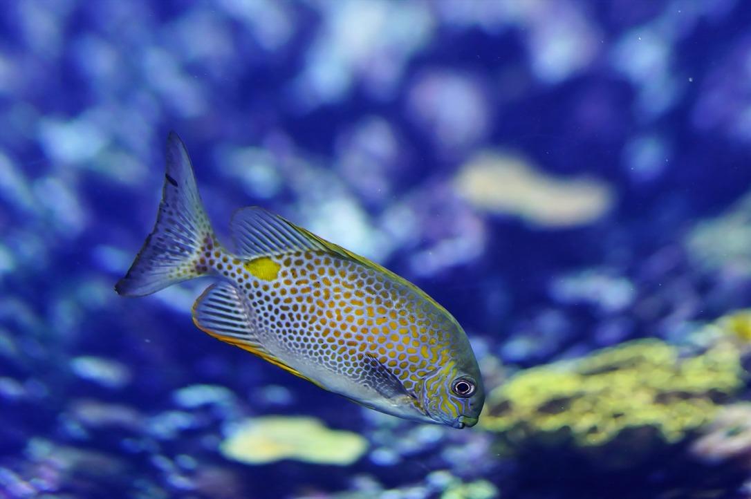 fish-1319830_1280